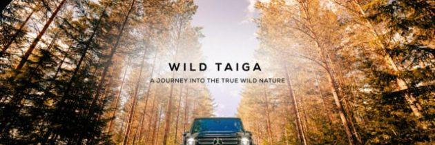Finland – Into the true wild nature